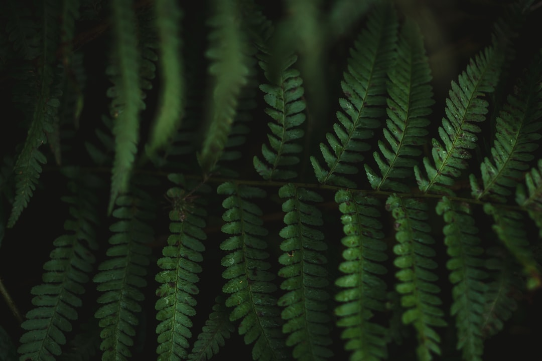 A beautiful green fern for website backgrounds.