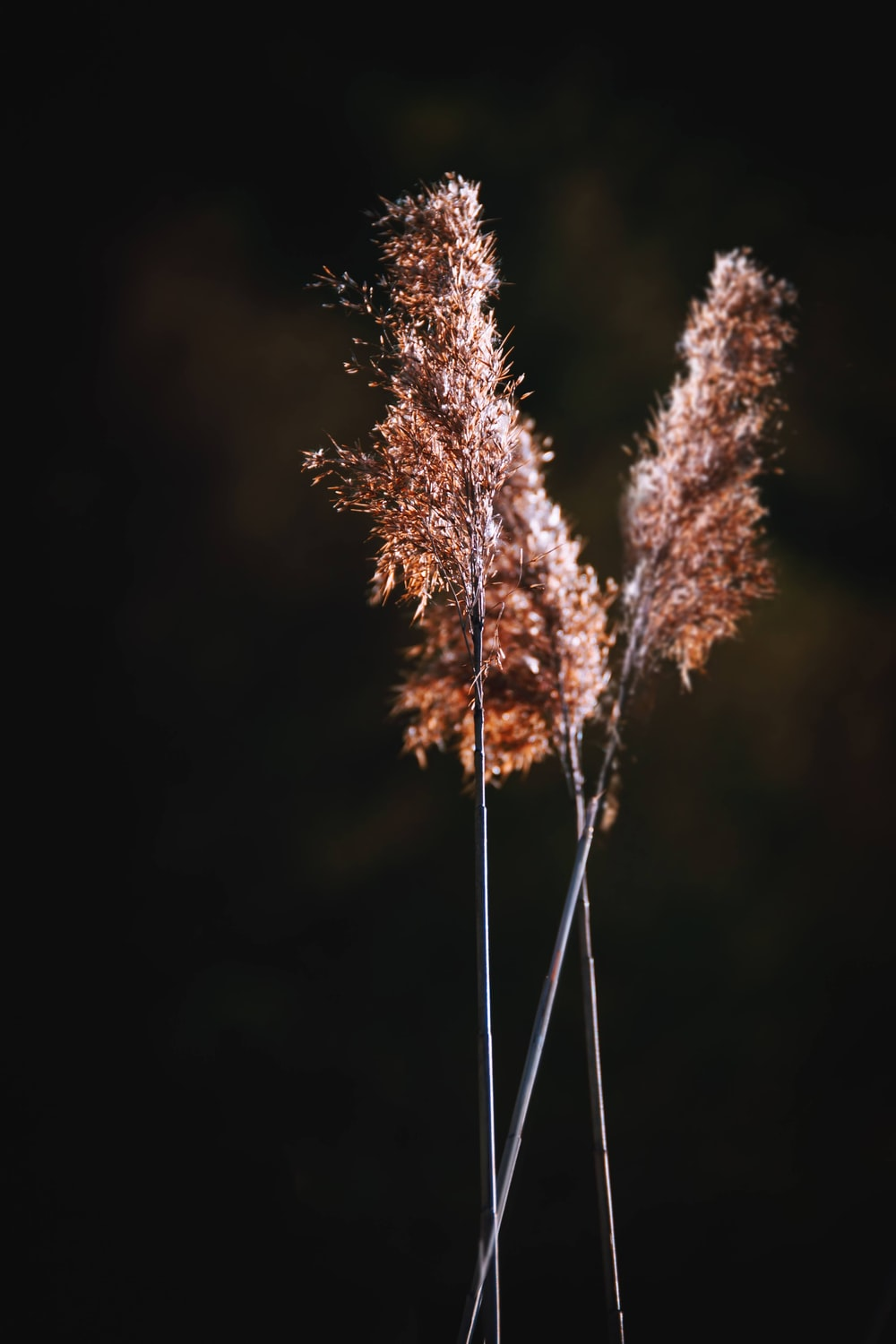 brown plant in close up photography