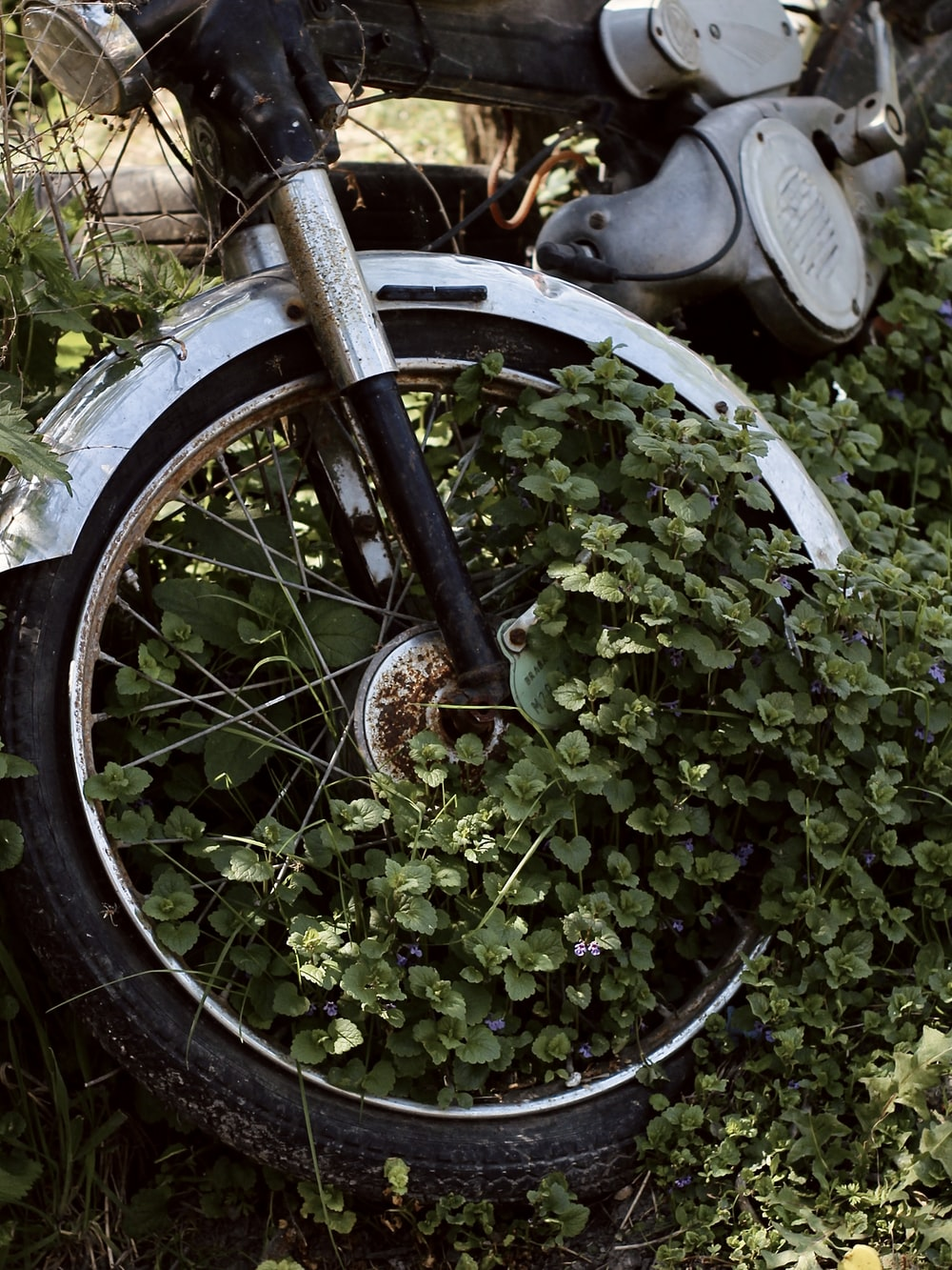 green plant on brown bicycle