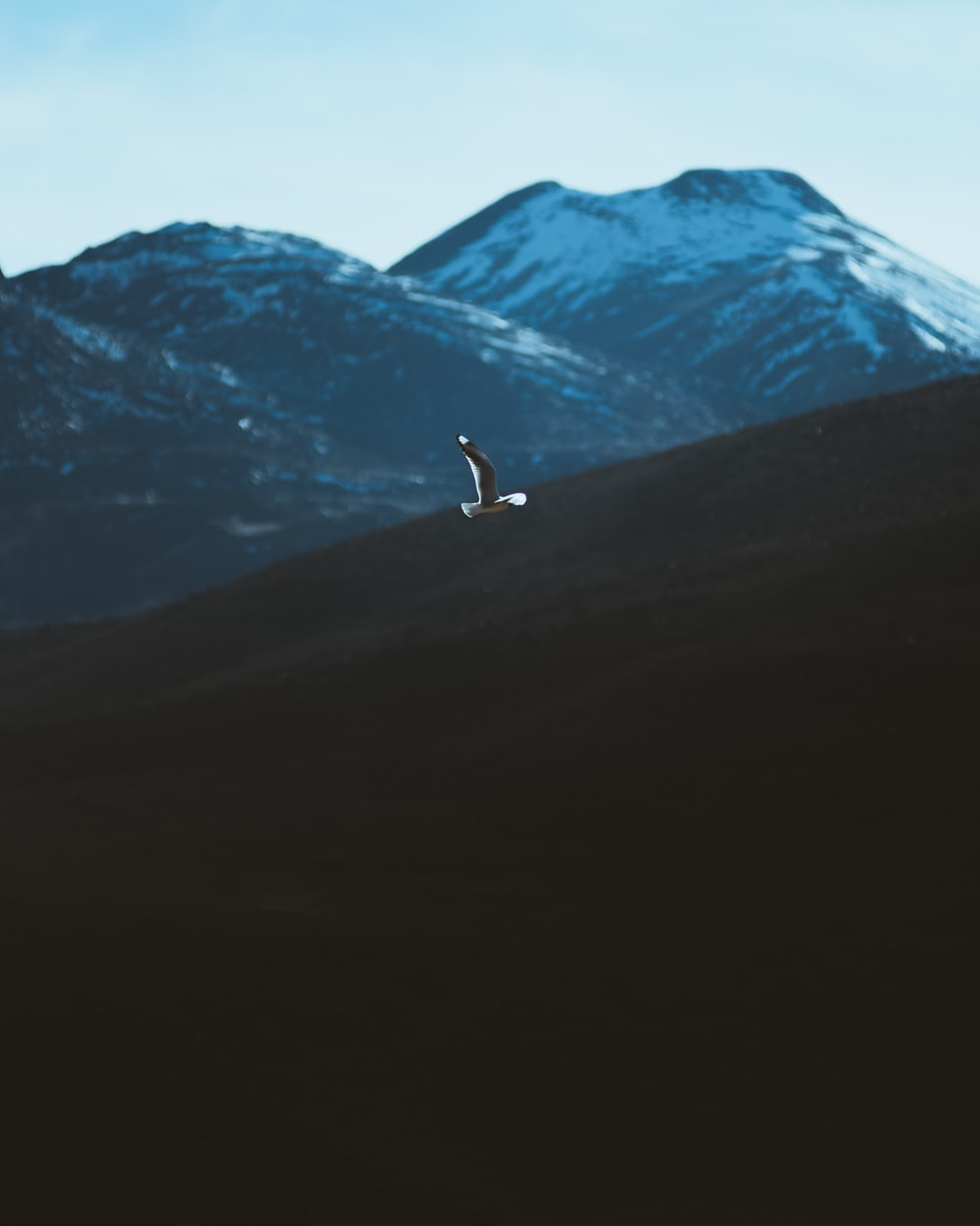 person walking on brown field near snow covered mountain during daytime