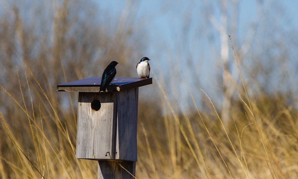 blue and white bird on brown wooden bird house