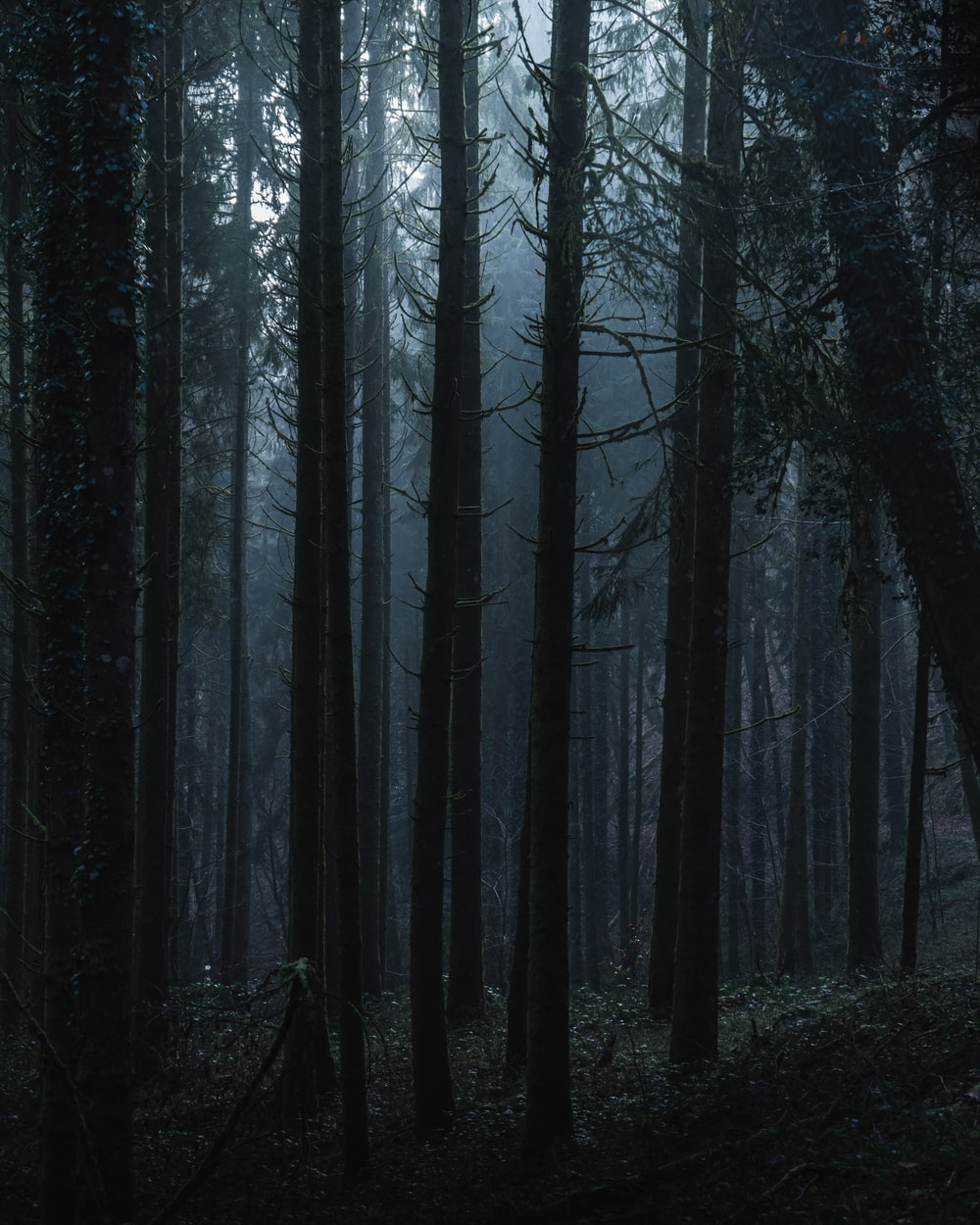 black bare trees in forest during daytime