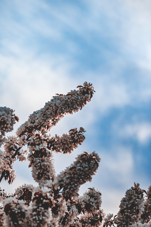 brown plant under blue sky during daytime