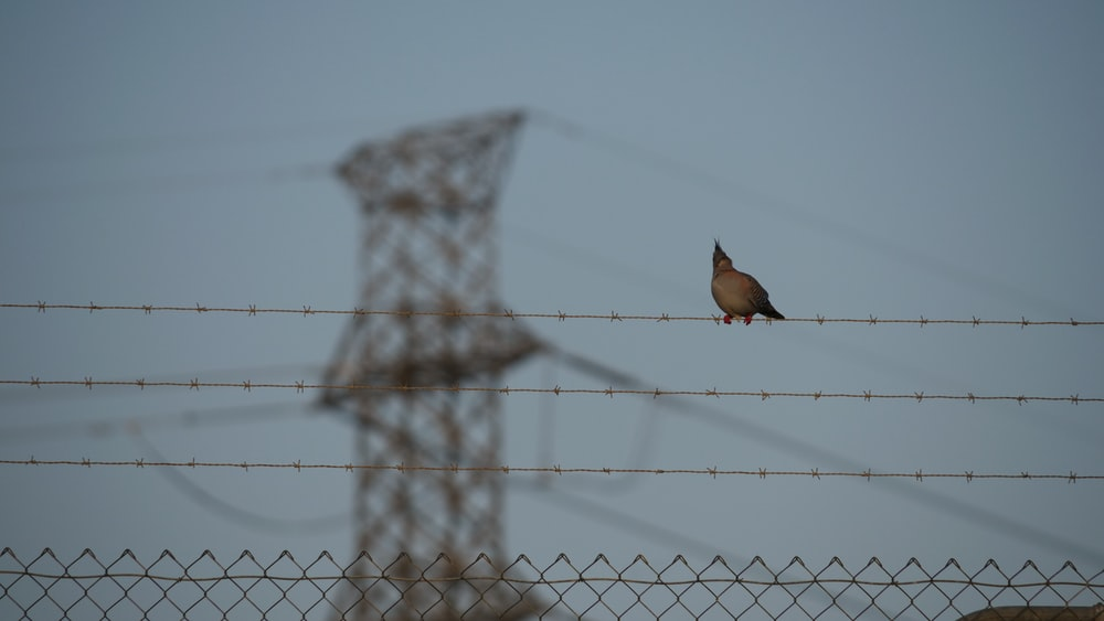brown bird on gray wire fence during daytime
