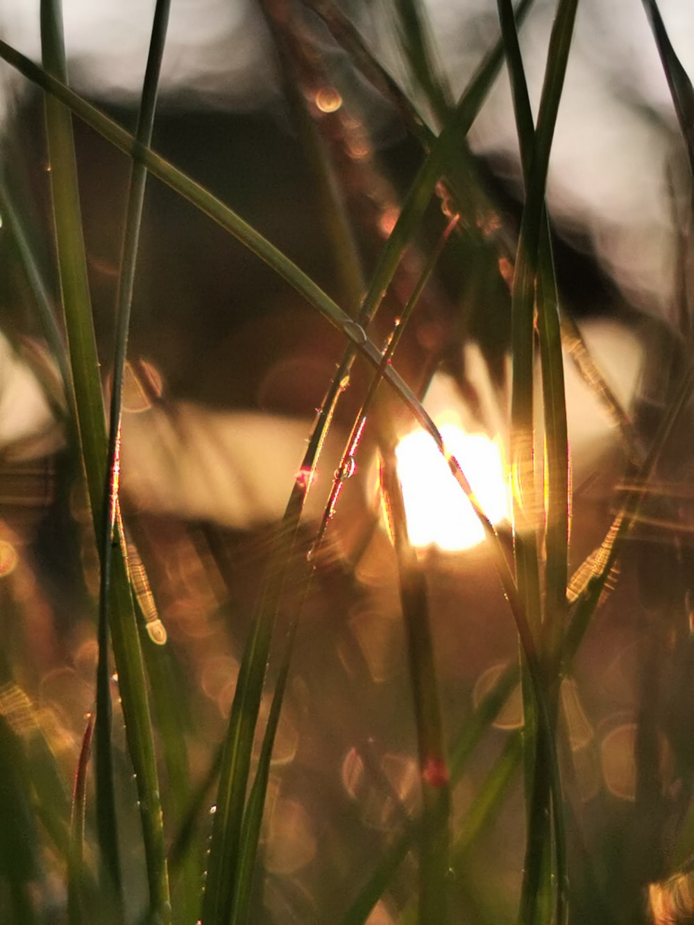green grass with sun rays