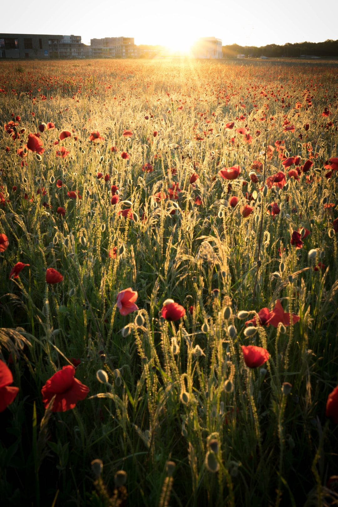 waking up in a red field