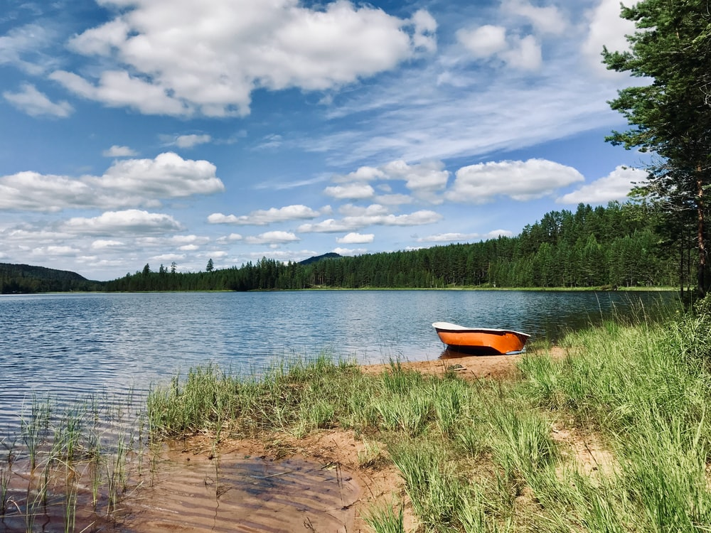 brown boat on lake shore during daytime