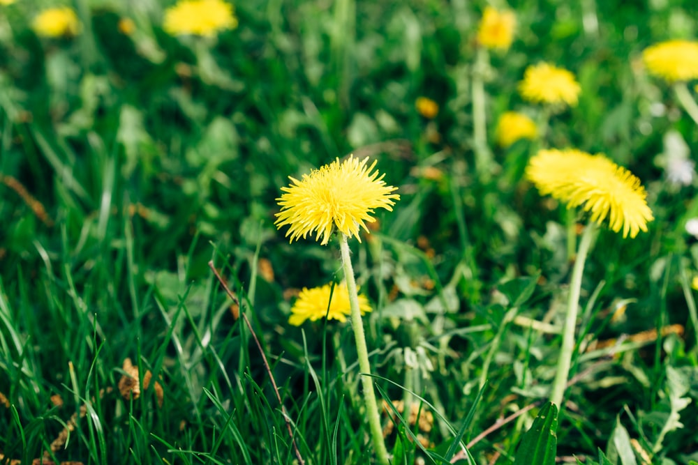 yellow flower on green grass during daytime