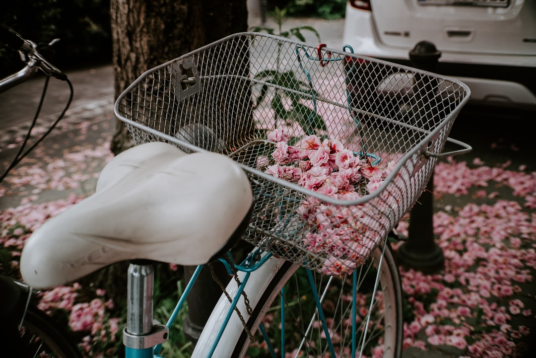 Falling cherry blossoms on an old bike