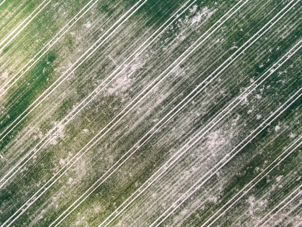 green and white wooden surface