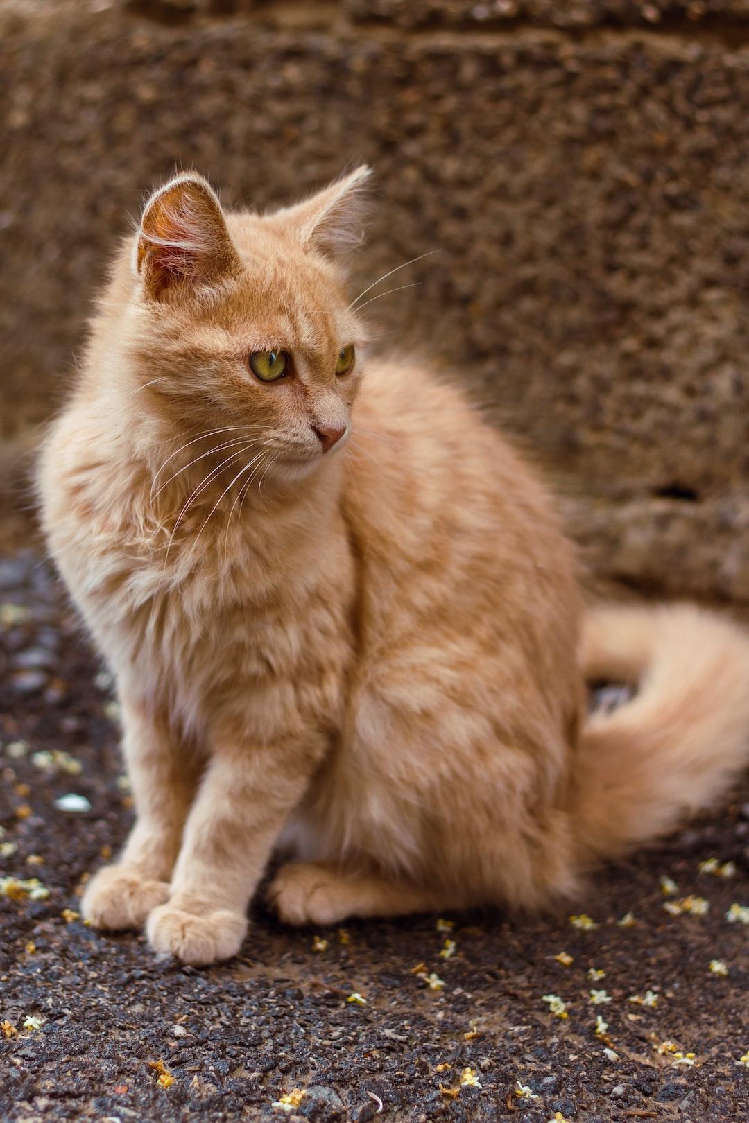 Golden cat 🐈