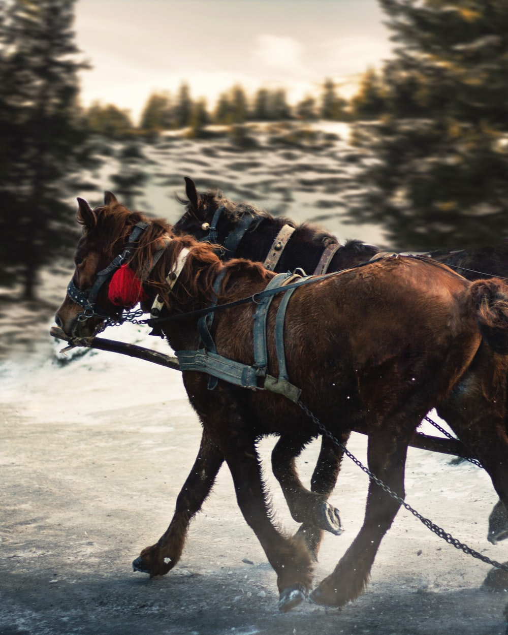 brown horse with black leather saddle on snow covered ground during daytime