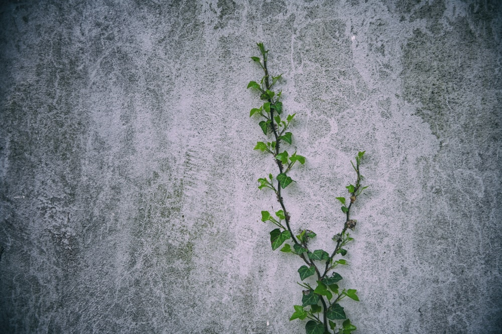 green plant on gray concrete wall