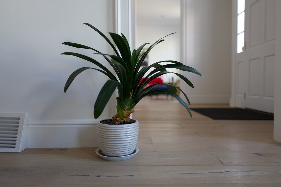 Decorative plant in a mid-century living room.