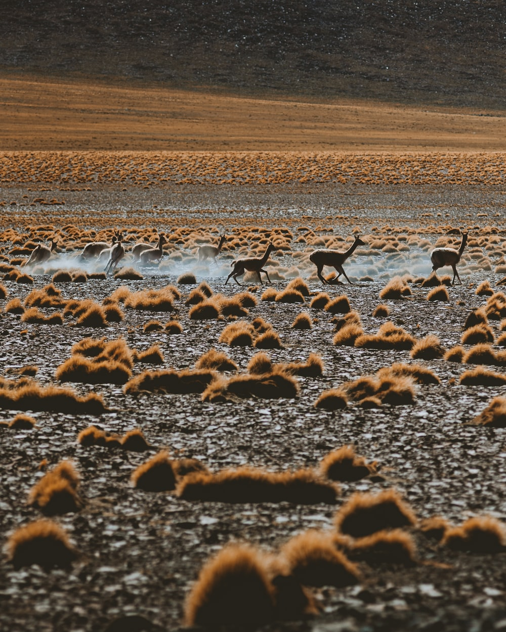 flock of birds on brown field during daytime