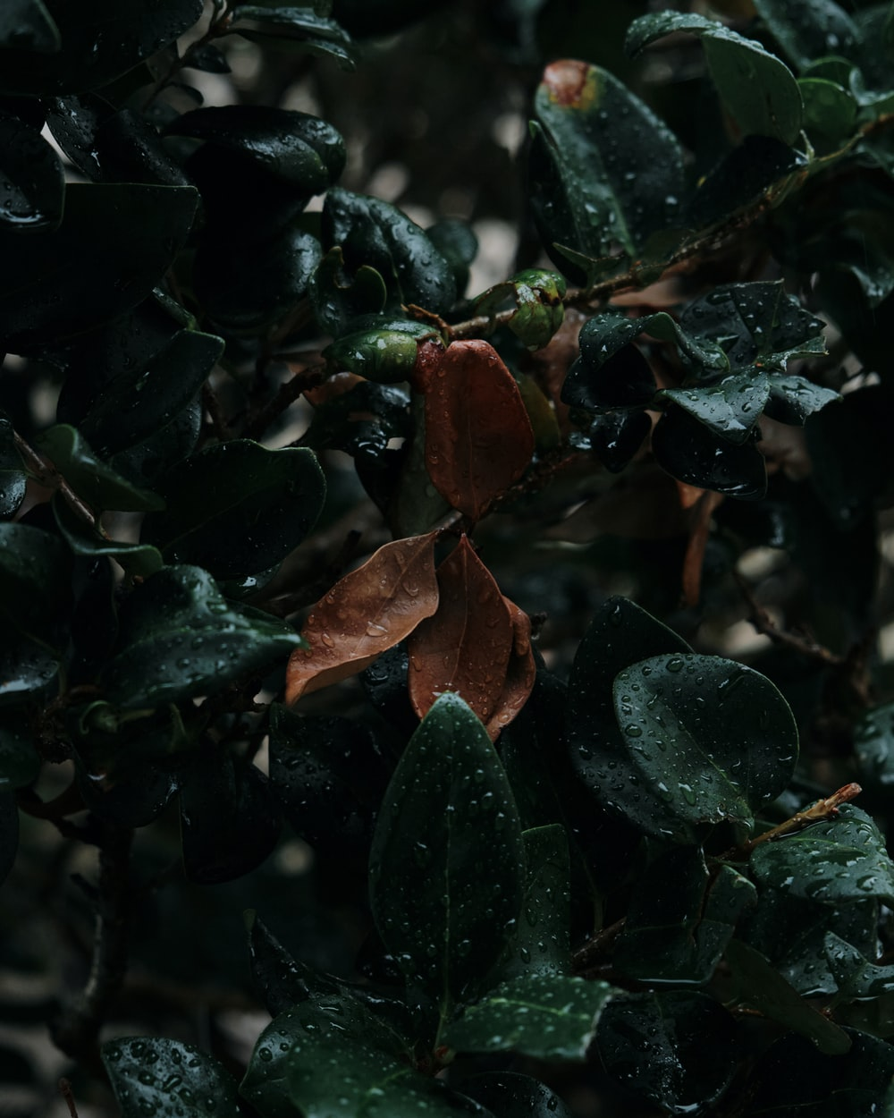 green and brown leaves with water droplets