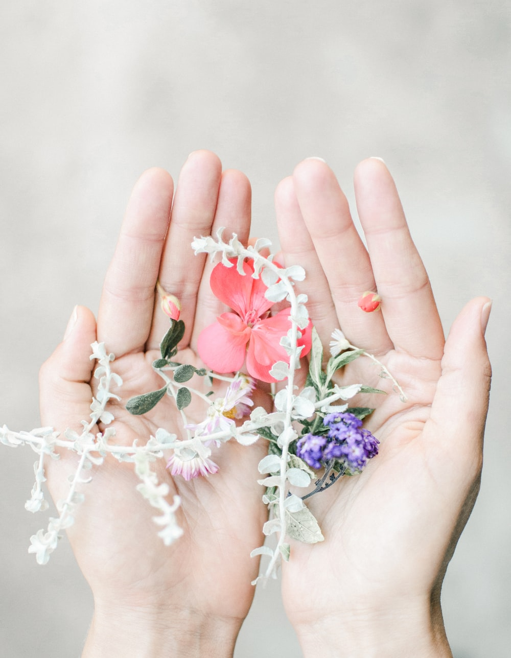 person holding pink and white flower