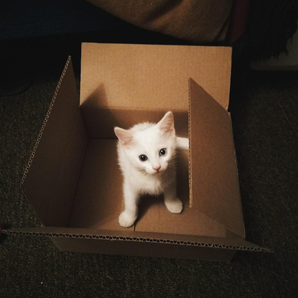 white kitten in brown cardboard box