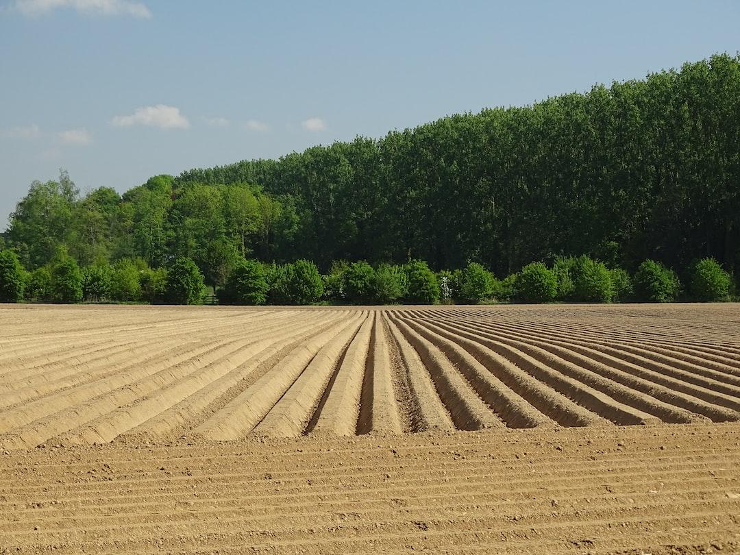Potatoes have been planted - De patatten zijn geplant - Les pommes de terre ont été plantées