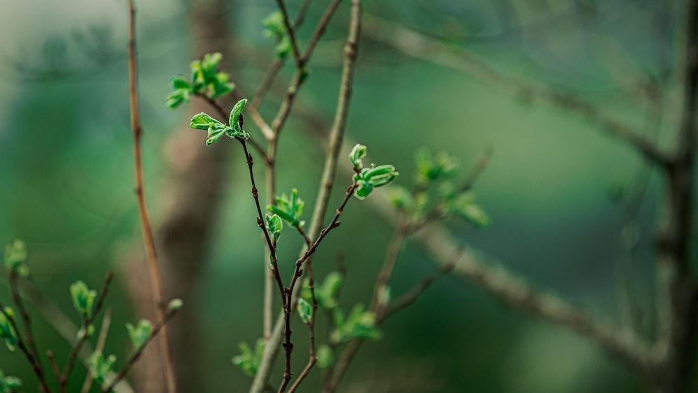 green frog on brown stem