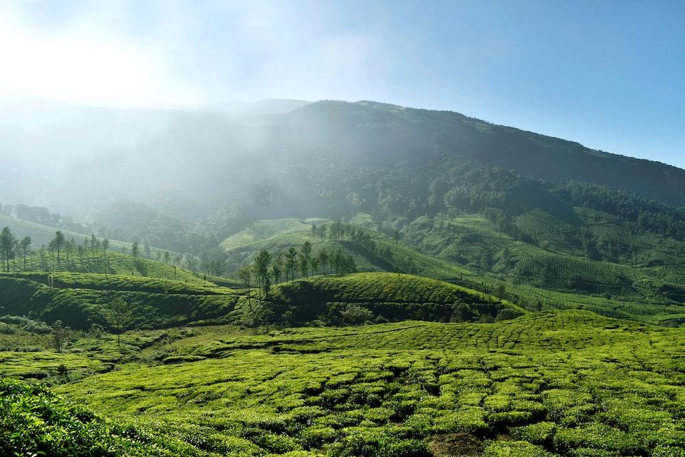 the lush green mountains of Munnar