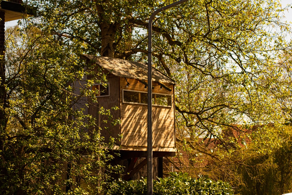brown wooden house in the middle of green trees