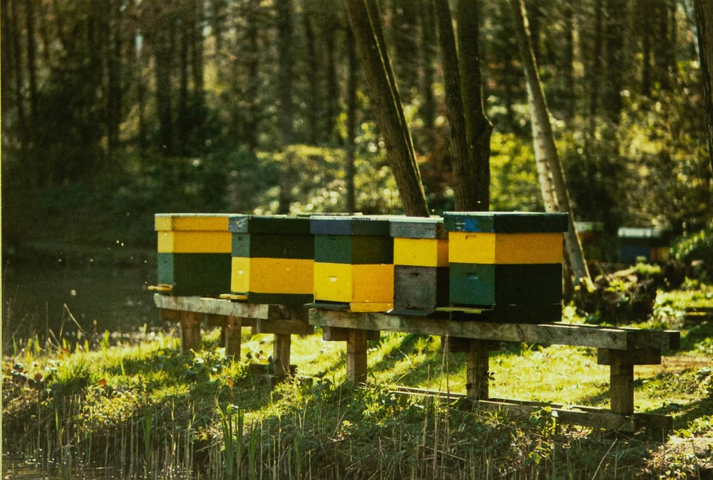 yellow and black wooden benches on green grass field