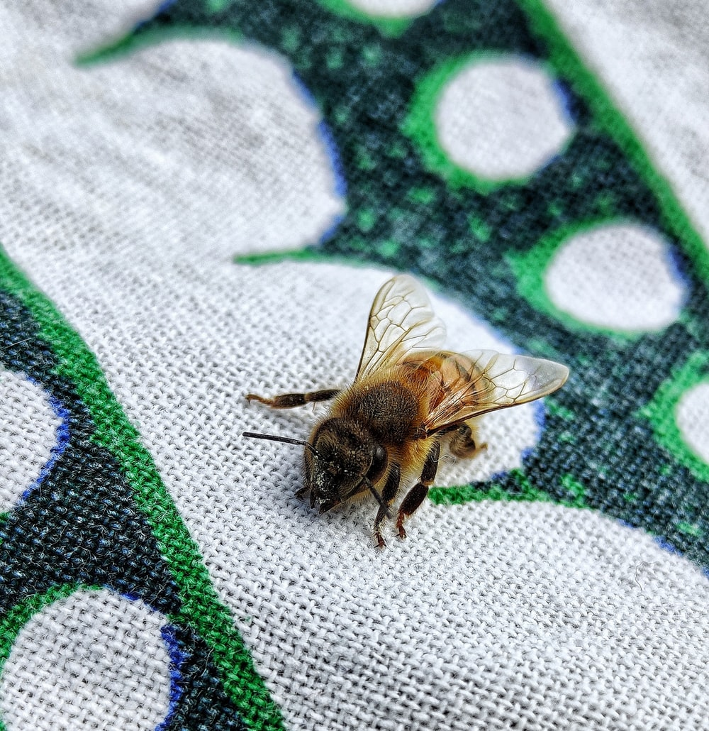 black and brown bee on white and green textile