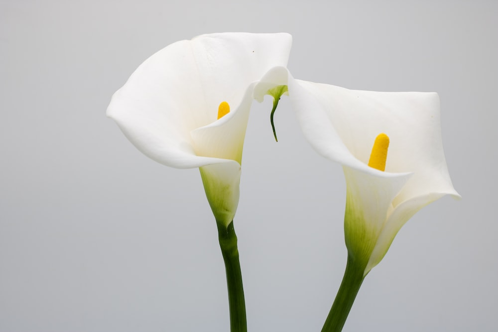 white flower with green stem
