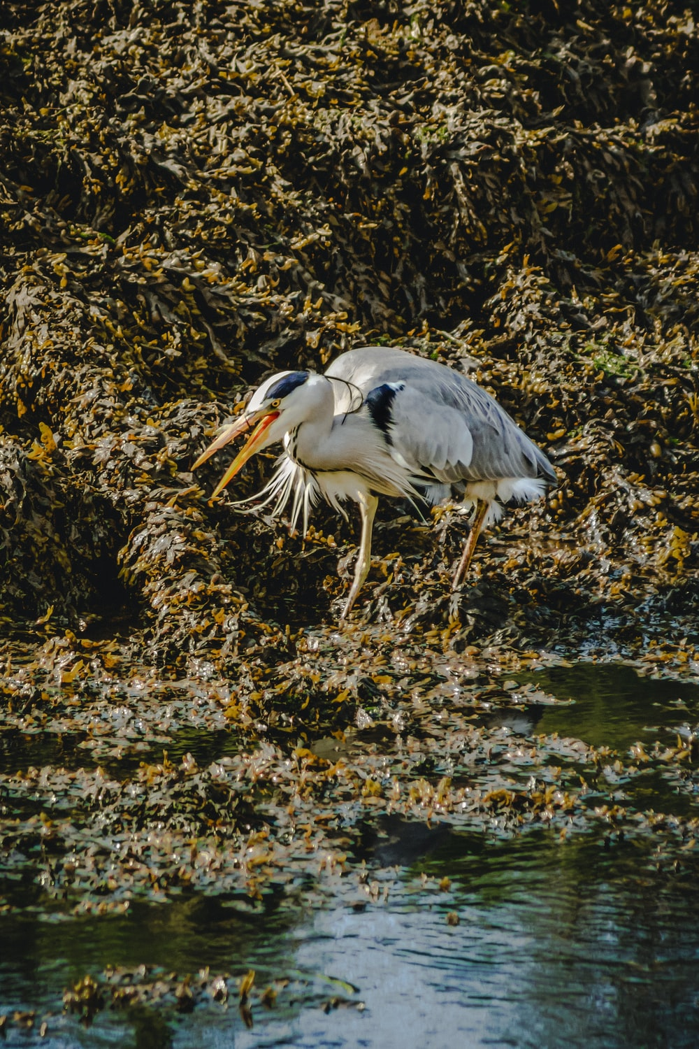 white stork on body of water during daytime