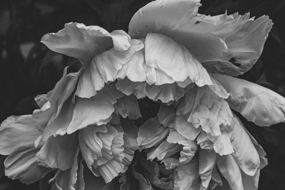 Black Flower Pictures Hd Download Free Images On Unsplash