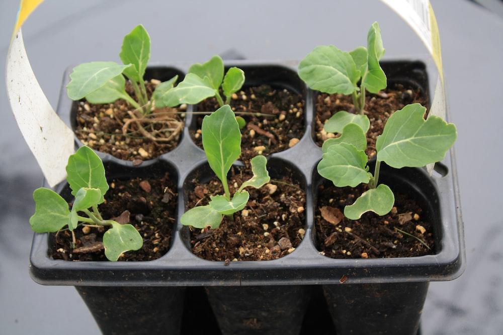 green plant on black plastic pot