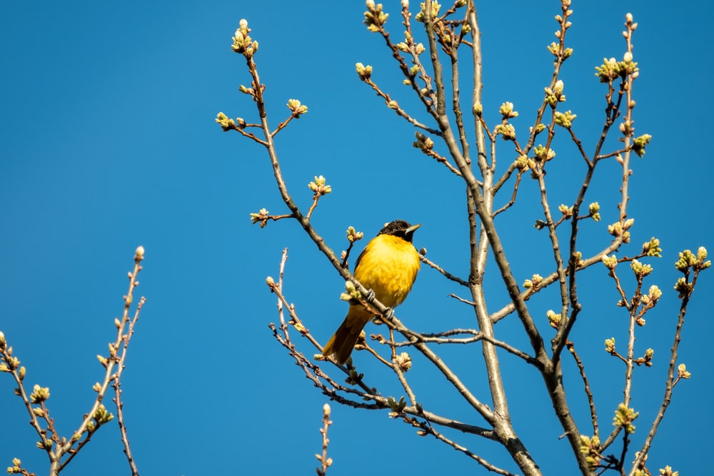 yellow bird on brown tree branch during daytime