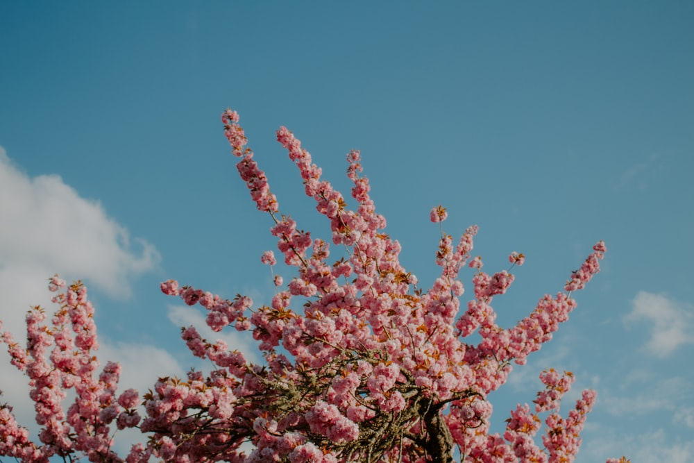 pink flowers under blue sky during daytime