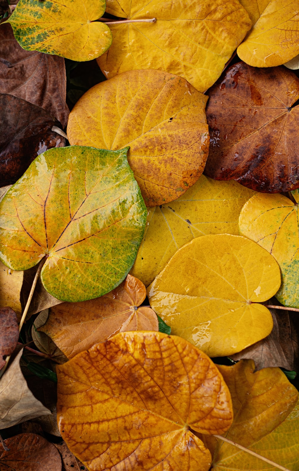 green and brown leaves on brown dried leaves