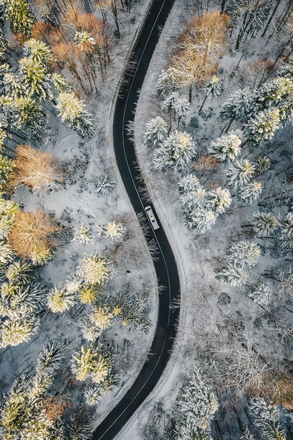 aerial view of road in between trees