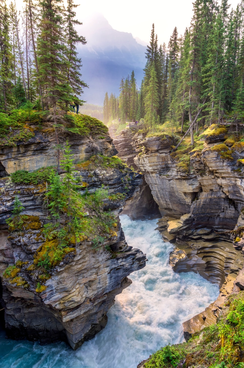 green trees on rocky mountain beside river during daytime