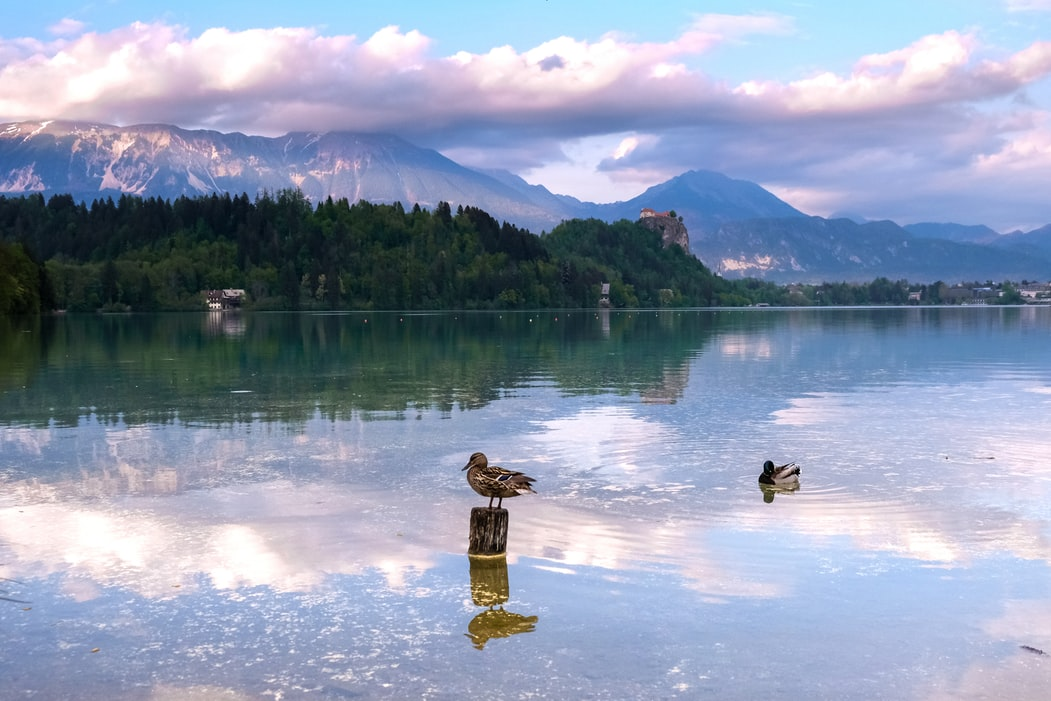 Lake bled: Things to do in Slovenia