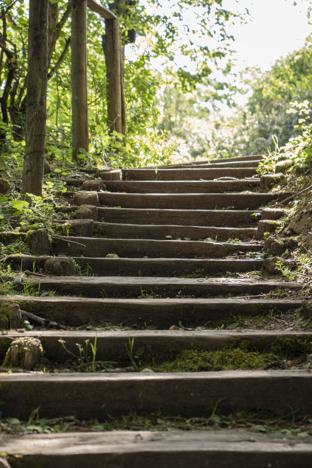 brown wooden stairs in forest during daytime