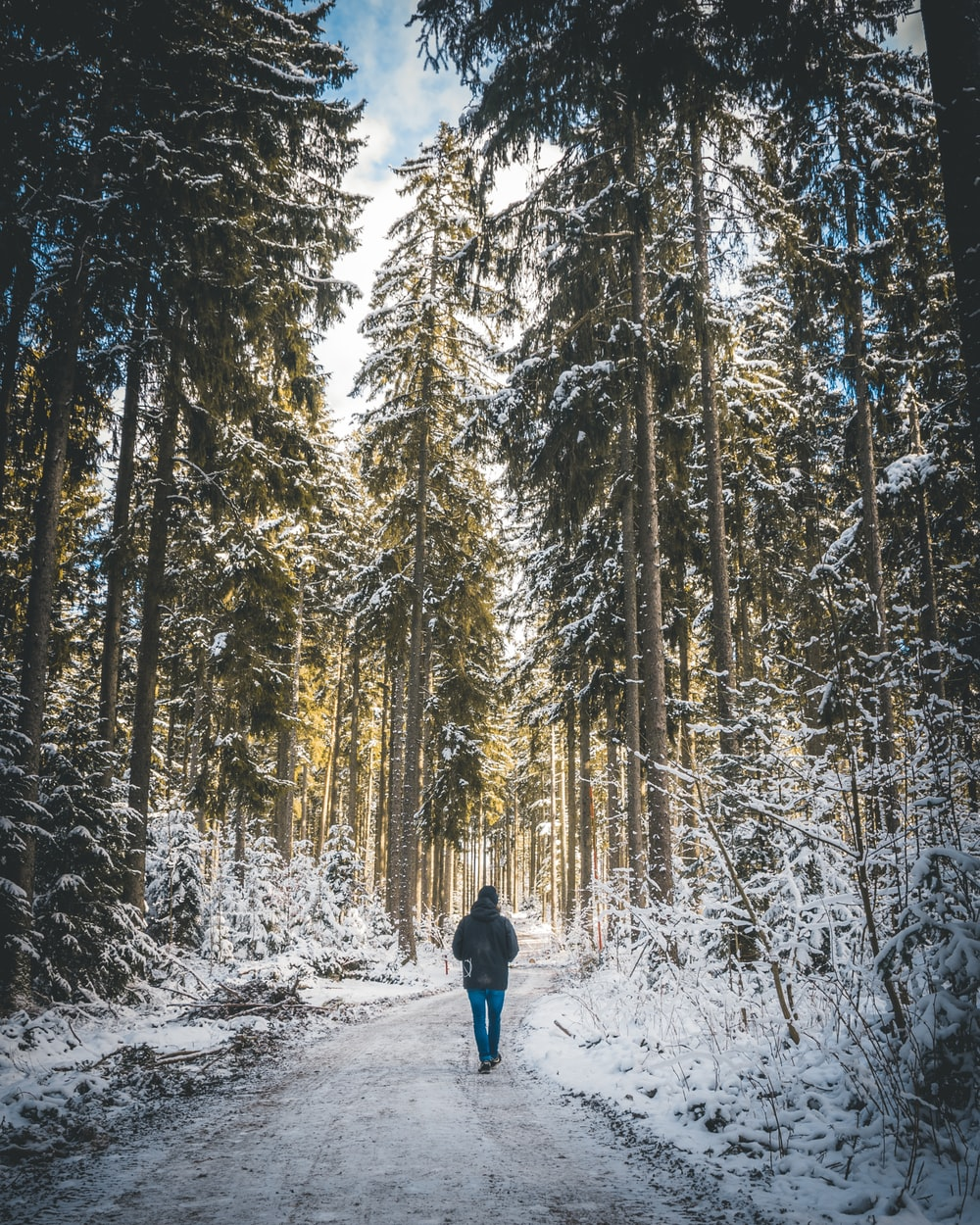person in blue jacket and blue denim jeans walking on snow covered ground surrounded by trees