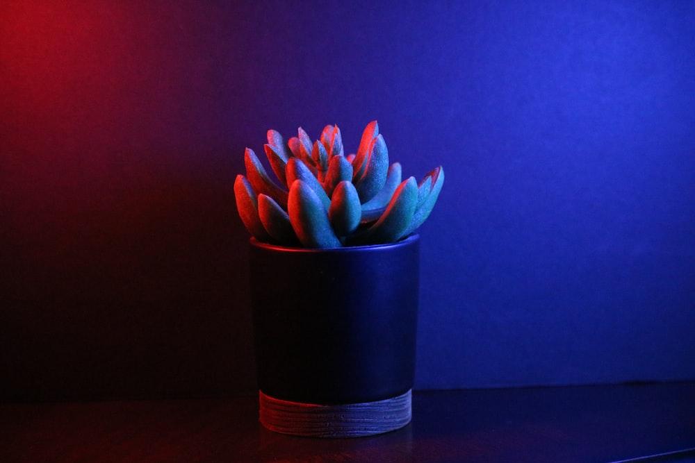 pink and blue flower in blue and black ceramic vase