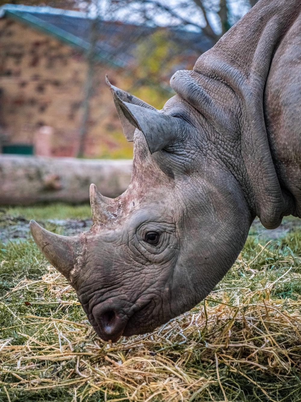 brown rhinoceros on green grass during daytime