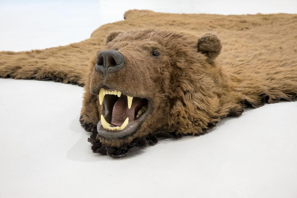 brown bear lying on snow