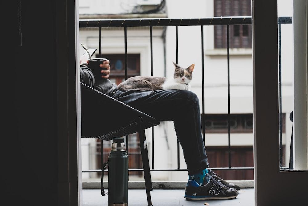 orange tabby cat on black table