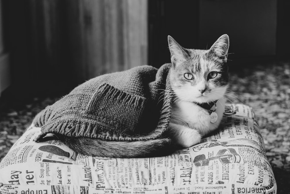 grayscale photo of cat on textile