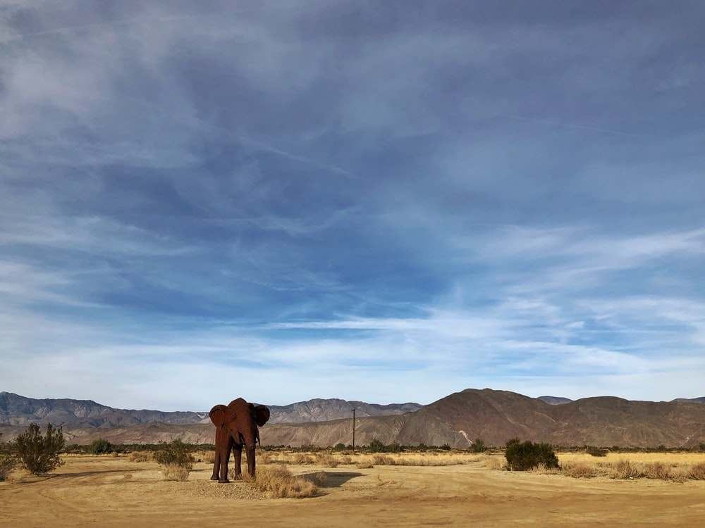 brown horse on brown field under blue sky during daytime