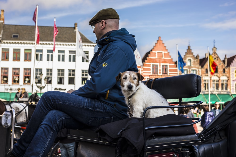 man in blue jacket and blue denim jeans sitting on black bench with white dog on on on on on
