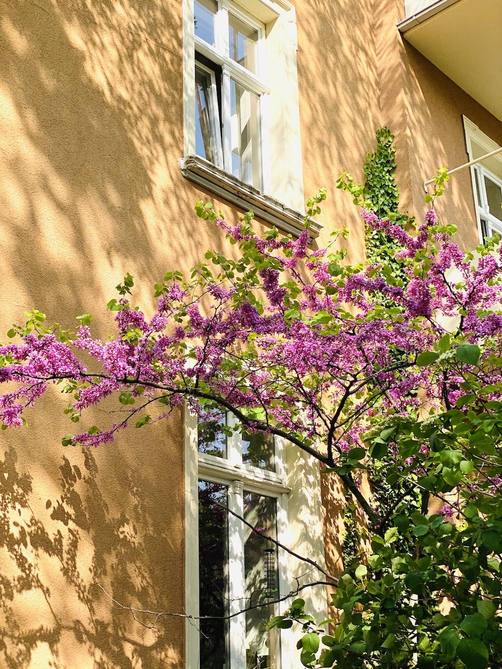 purple flowers on brown wall
