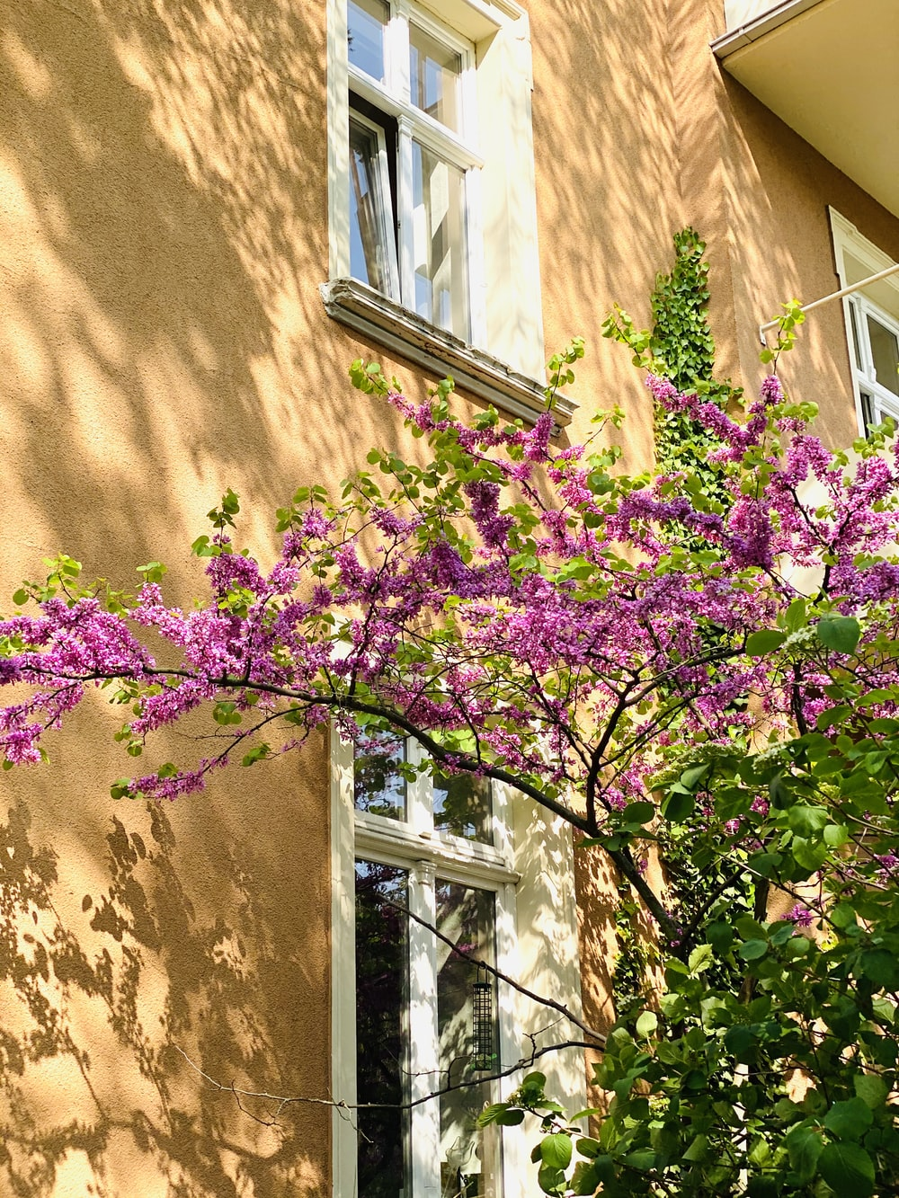 purple flowers on brown wall