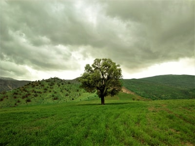 green tree on green grass field under cloudy sky during daytime